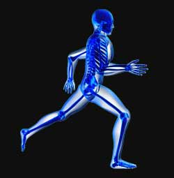 bones os squelette