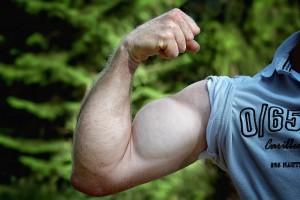 Reussir son BPJEPS AF AGFF LES MUSCLES : CE QUE VOUS DEVEZ SAVOIR POUR LE BPJEPS Bras avant bras