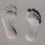 Reussir son BPJEPS AF AGFF LES MUSCLES : CE QUE VOUS DEVEZ SAVOIR POUR LE BPJEPS pied pieds