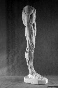 BPJEPS biomechanique BIOMECANIQUE ET ANATOMIE FONCTIONNELLE genou statue