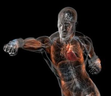 BPJEPS biomechanique BIOMECANIQUE ET ANATOMIE FONCTIONNELLE homme