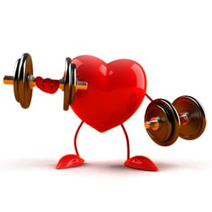 Comment fonctionne le système cardio-vasculaire ?