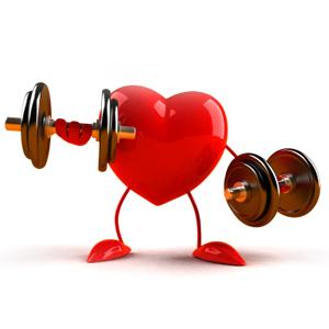 Appareil cardio-vasculaire Coeur Diplôme BPJEPS AGFF formation coach sportif