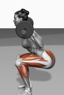 Squat : muscles moteurs et stabilisateurs