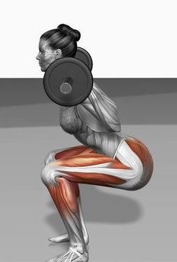 Squat muscles moteurs stabilisateurs BPJEPS AF AGFF