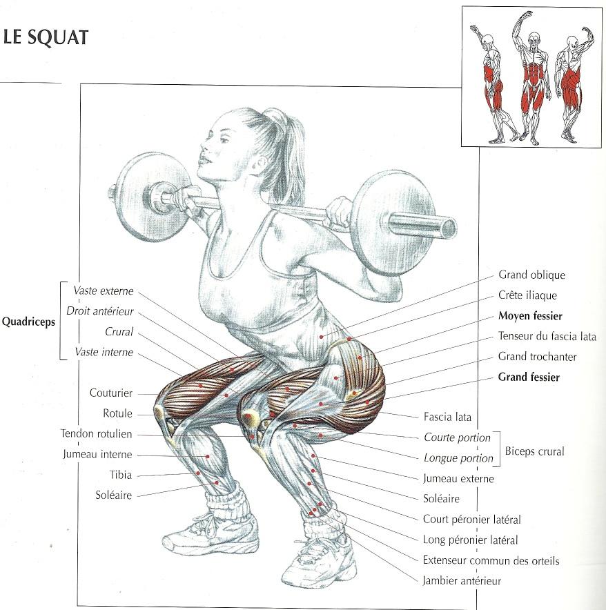 Squat mouvements de base Delavier illustration