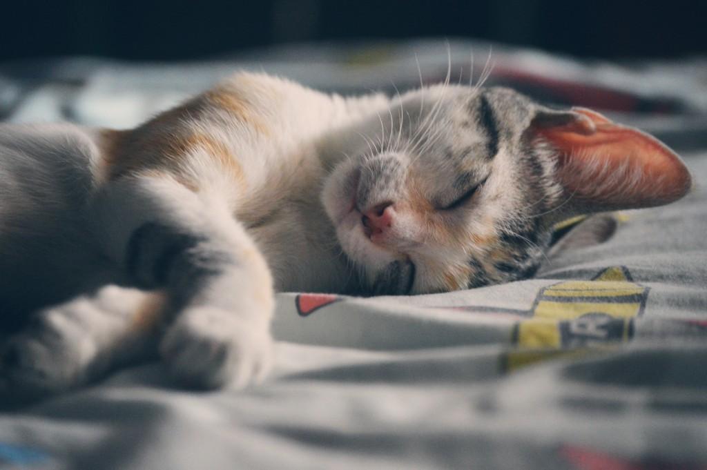 Reussir son BPJEPS AF AGFF VOS PRATIQUANTS ARRIVENT FATIGUES EN SALLE… dormir