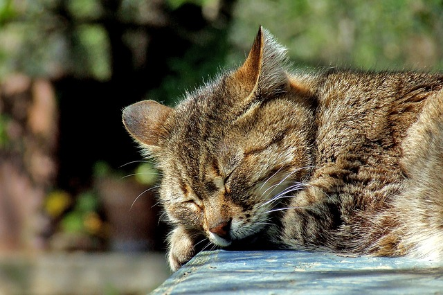 Reussir son BPJEPS AF Comment optimiser sa recuperation dormir chat