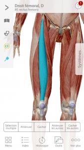 Visible Body app BPJEPS quadriceps