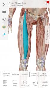 Visible Body app BPJEPS quadriceps masque