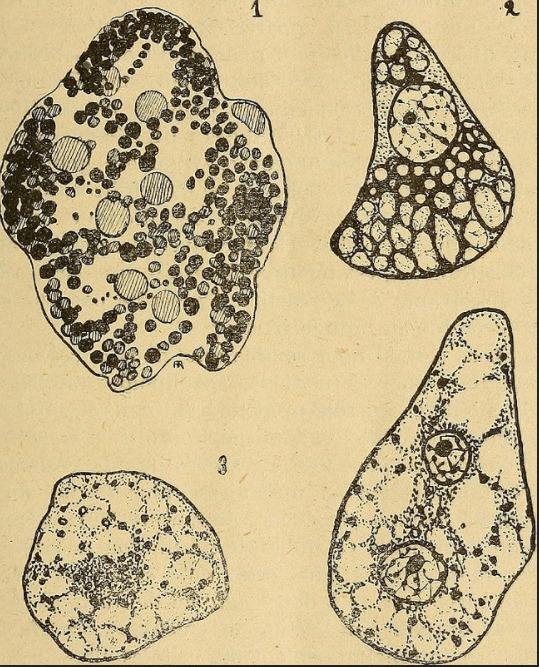 Cellules graisseuses BPJEPS AF perte de poids